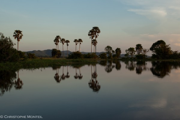 palm trees on the secret lake, Kampot province, Cambodia