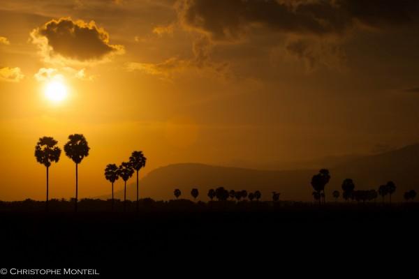 Palms trees, Kampot province, Cambodia